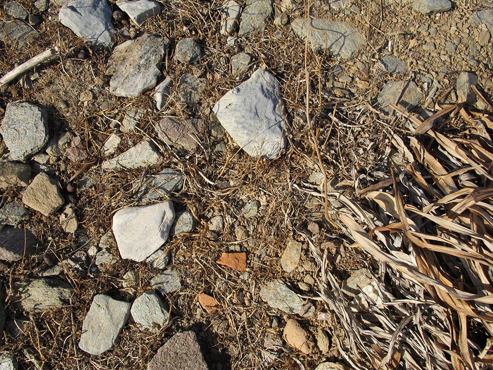 Pottery sherds among the stones on the ground