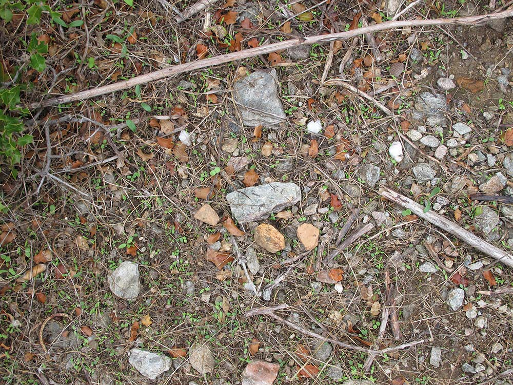 Sherds among leaves