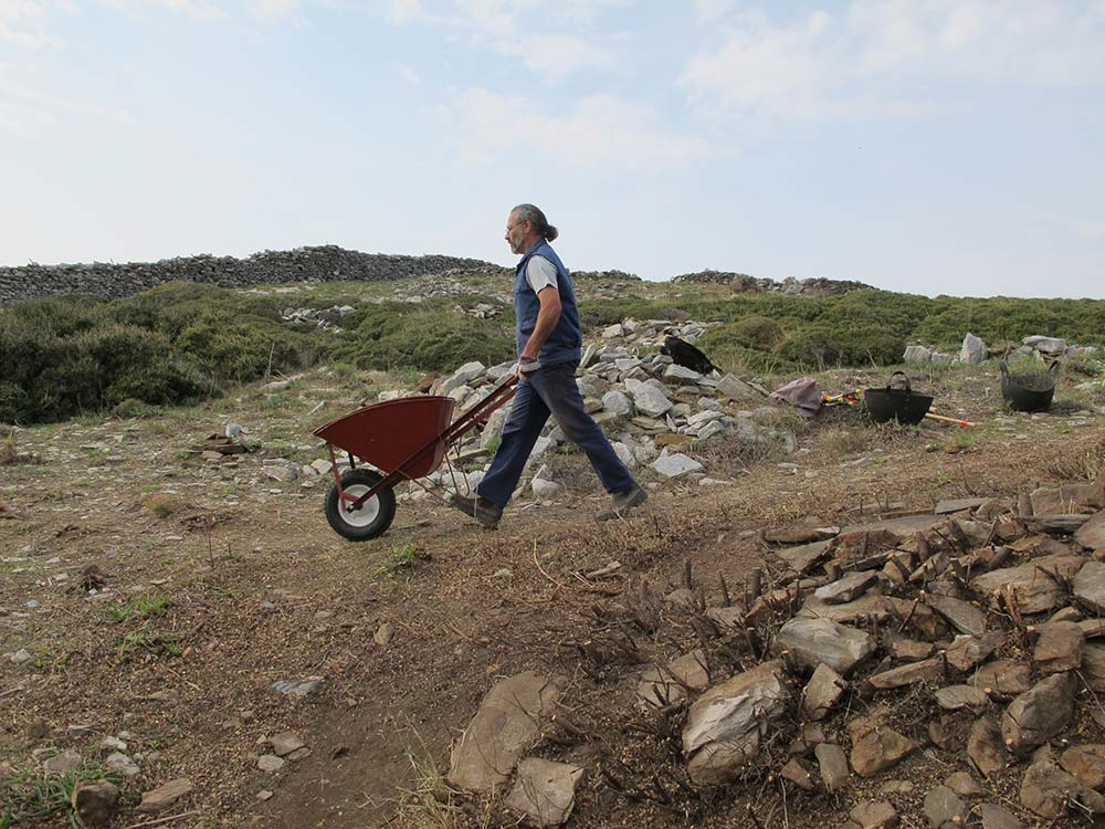 Steve Vassilakis removing rocks and soil in a wheelbarrow