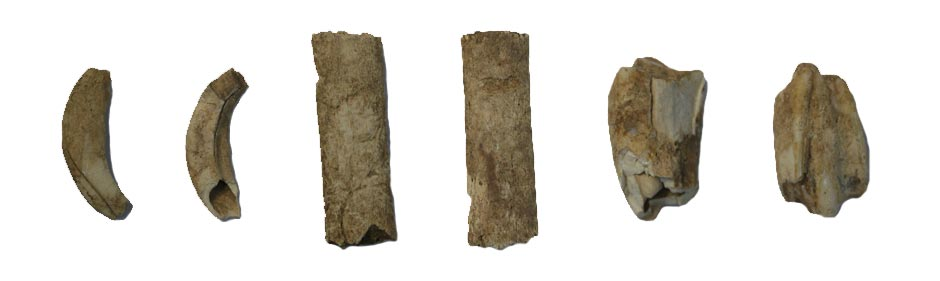 Three animal bones that were found at Zagora
